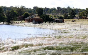 spider-fields-australian-floods