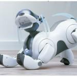 alternatives-to-real-pets5-aibo