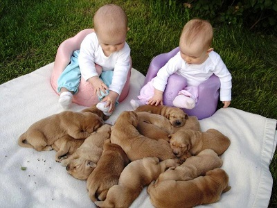 babies-protecting-puppies