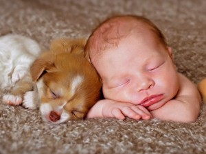 baby-puppies-sleeping