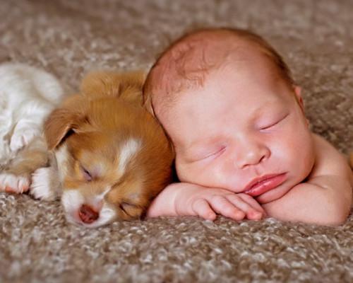 baby-puppies-sleeping