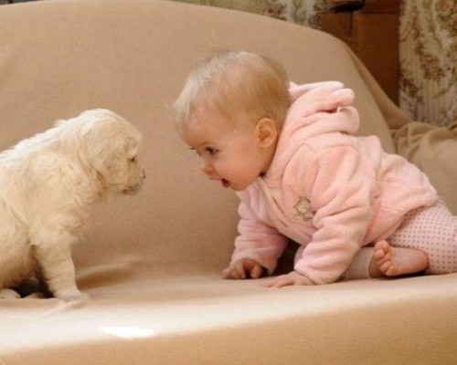 baby-puppy-staring-contest