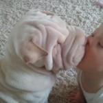cute-baby-kisses-puppies