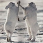 epic-high-five-rabbit