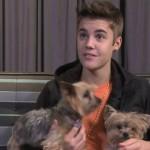 justin-bieber-baby-puppies