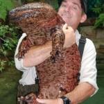 BB-Japanese-Giant-Salamander