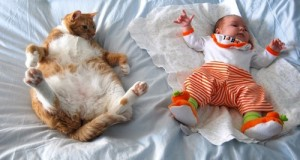 funniest-sleeping-cats1