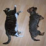 funniest-sleeping-cats12