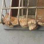 funniest-sleeping-cats13
