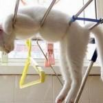 funniest-sleeping-cats15