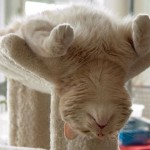funniest-sleeping-cats16