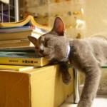 funniest-sleeping-cats17