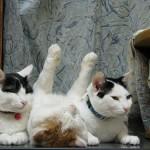 funniest-sleeping-cats18