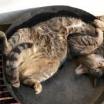 funniest-sleeping-cats2