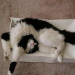 funniest-sleeping-cats20