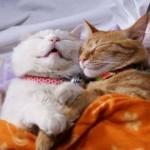 funniest-sleeping-cats21