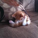 funniest-sleeping-cats3