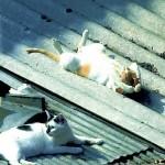 funniest-sleeping-cats4