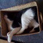 funniest-sleeping-cats7