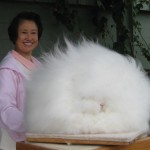 amazing-animals-Angora-Rabbit-7