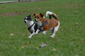 new-dog-park-in-rock-hill