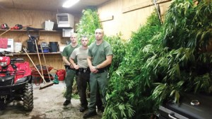 pot-plants-seized-in-bluefield-wv