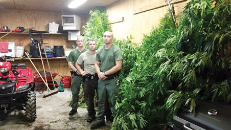 $15 Million Worth of Pot Plants Seized Near Bluefield, WV