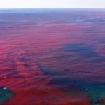 Red-tide-bloom-in-florida