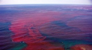Red-tide-bloom-in-florida
