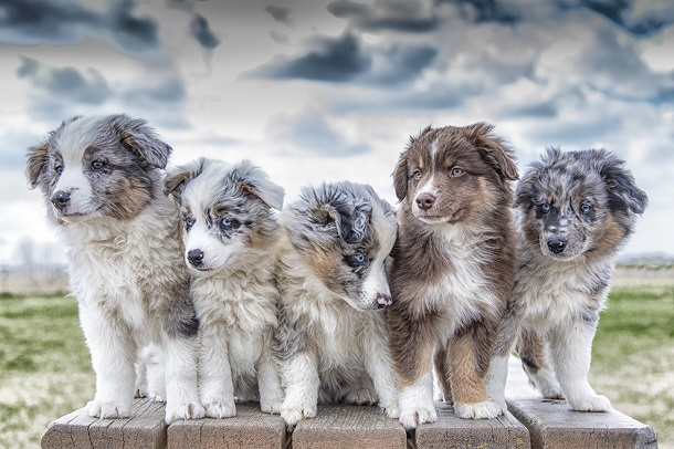 cutest-puppies-ever1