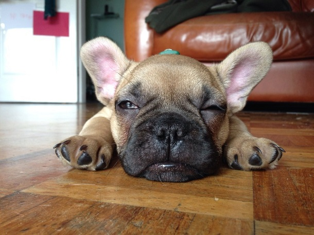 cutest-puppies-ever10
