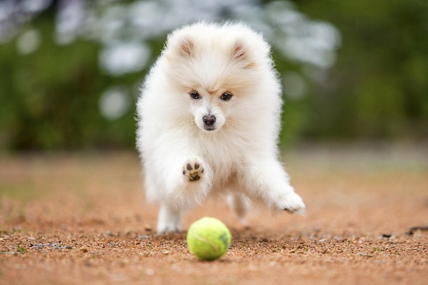 cutest-puppies-ever4