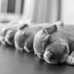 cutest-puppies-ever5