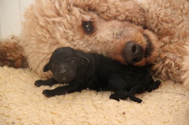 cutest-puppies-ever8