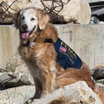 last-surviving-rescue-dog-from-911