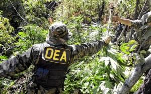 new-orleans-marijuana-seized