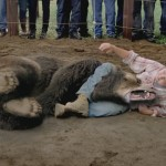wrestling a bear is illegal – stupid laws