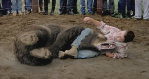 wrestling a bear is illegal - stupid laws
