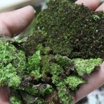cool-moss-DIY-project2