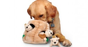 coolest pet toys on Amazon under 25 dollars