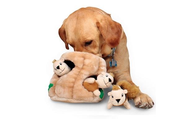 coolest pet toys on Amazon under 25 dollars