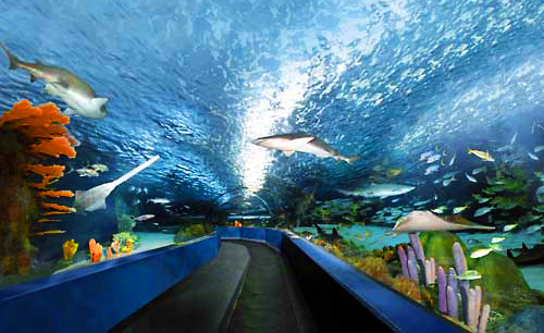 SC Aquarium in Charleston Receives Largest Donation in History