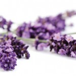 Lavender anxiety cure