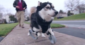 dog runs for first time with 3-d printed legs
