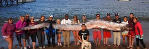 The Largest Oarfish Ever Captured May Be The Source Of Sea Monster Legends