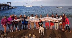 largest oarfish ever caught