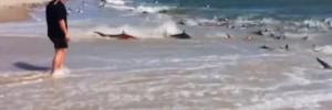 Shocking Video of Hundreds of Sharks in Feeding Frenzy on North Carolina Beach